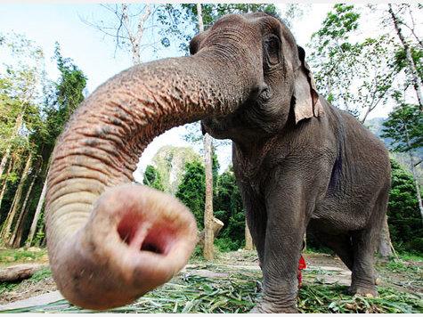 1982031919-thailand-elefanten-hotel-3i09.jpg